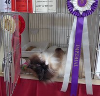Imperial grand champion kiwimagic our best kept secret