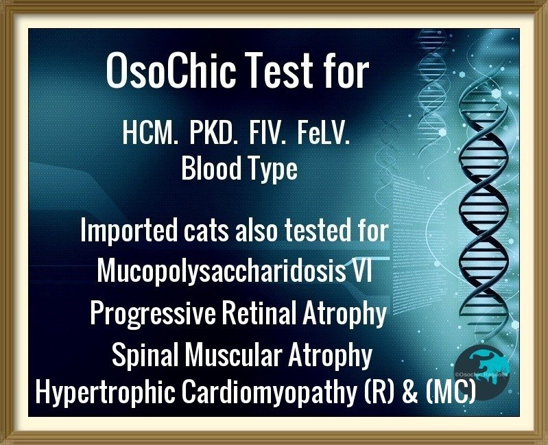 OsoChic Ragdolls Genetic Health Tests. osochicragdolls.co.uk